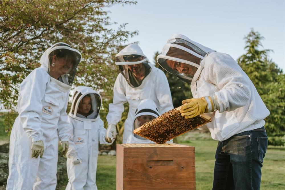 Tiaki Bees - Meet your Bees